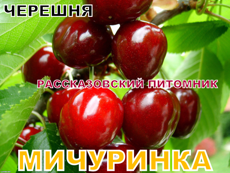 плодопитомник г Рассказово