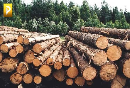 Рассказовский лесхоз получил звание лучшего лесного питомника РФ